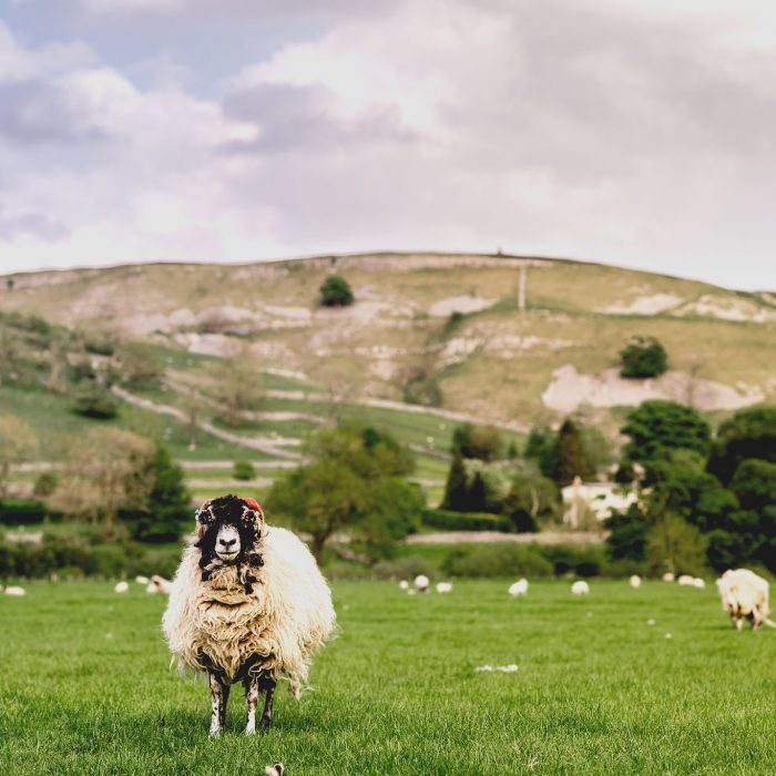 Yorkshire Dales Wedding