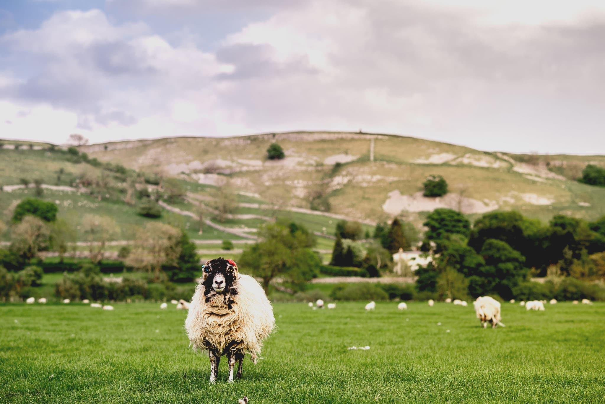 Yorkshire dales wedding